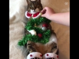 А как вы обычно украшаете елку?