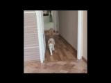 Многоимённый кот
