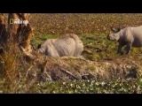 Тайны дикой природы Индии В царстве слонов. Документальный фильм