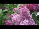 Beauty of Spring (Ernesto Cortazar - Climbing a Tree)