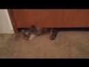 Жидкий кот