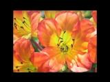 Chris BARBERs Jazz Band with Monty SUNSHINE - Petite Fleur