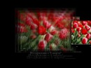 ★Поздравление★ - Поздравление с 8 марта от 95 квартала