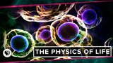 The Physics of Life (ft. It's Okay to be Smart &amp PBS Eons!) Space Time
