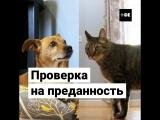 Кто отреагирует на «смерть» хозяина: пес или кот?
