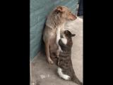 Они жили как кошка с собакой. Он её охранял, а Она его любила.?