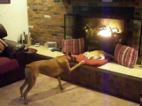Boxer wants cats spot by the fire