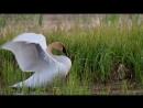 Два Белых Лебедя-Владимир Захаров(Видео 2016г)