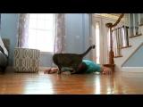 Реакция кота на смерть хозяина