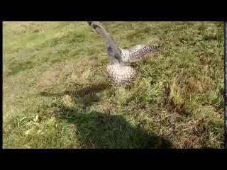 Экологи спасли крупную сову во дворе природоохранного ведомства