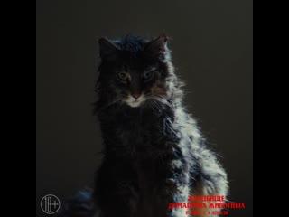 """""""Кладбище домашних животных"""" в кино с 4 апреля"""