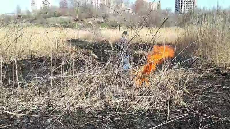 Попытки сжечь камыш в ельшанском овраге