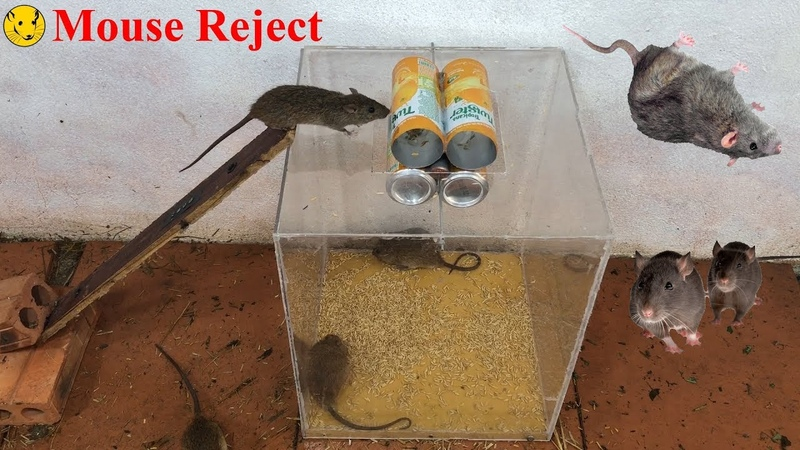 Mouse Reject DIY to make A Mouse Trap Homemade Idea Mouse Trap Easy Saving 12 Mice In Few Minute
