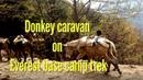 Donkey caravan on Everest base camp trekking in Nepal