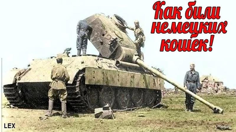 Куда били немецкую кошку Под Курском из 200 Пантер за 3 дня осталось 20 машин. военные истории