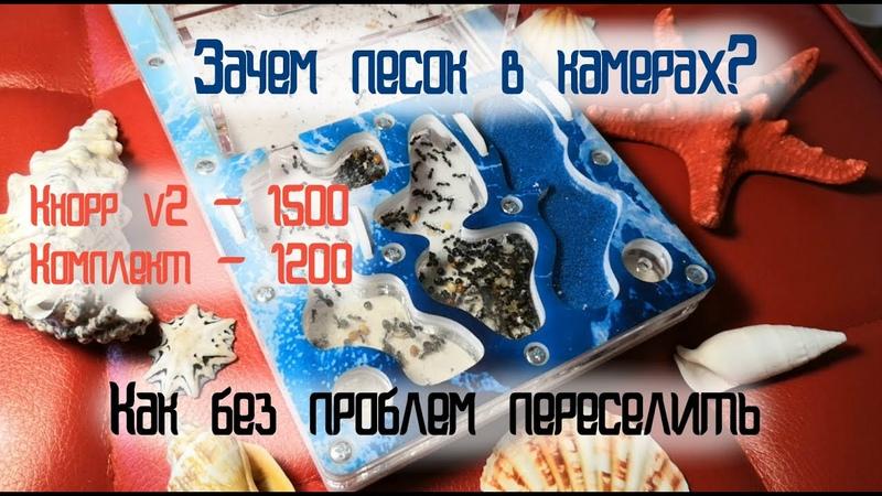Кнорр v2 комплект Быстрый старт первые действия после распаковки заселяем и ухаживаем ГАЙД