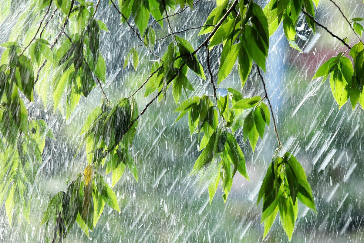 представление картинка красивая с дождиком уникальную