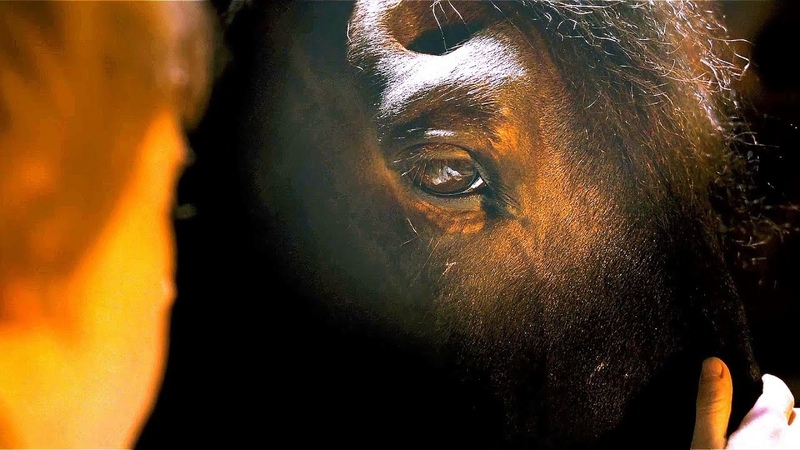 Заколдованная лошадь. Братья Гримм (2005) год.