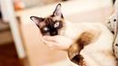 Топ 10 самых красивых кошек мира