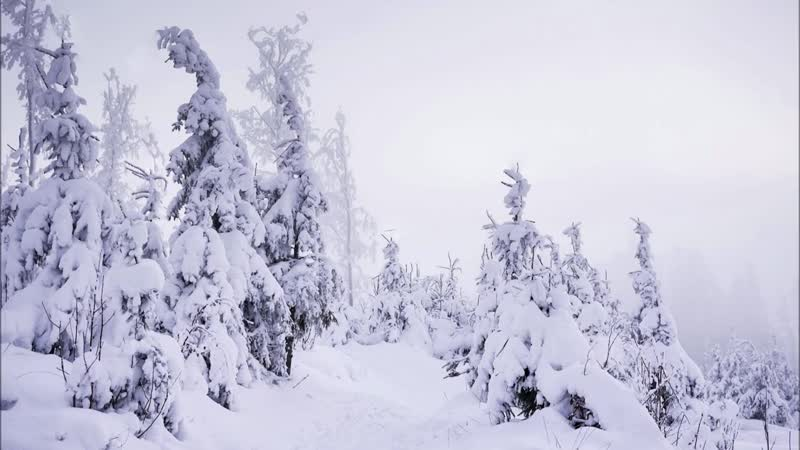DİNLENDİRİCİ KAR FIRTINASI SESİ. Rüzgar Sesi, Doğa, Orman Manzarası, Rahatlatıcı Fon Müzik, Uyku.