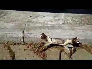 Крабы завелись в Химках