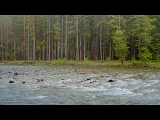 4K Relaxing River Scenery - Olympic National Park - 10BIT Color Video with Calmi