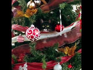 Котик спрятался в ёлке