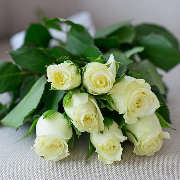 решила белые розы стихи красивые бесплатные