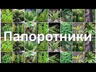 18. Папоротники (6 класс) - биология, подготовка к ЕГЭ и ОГЭ 2020