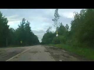 Последствия сильного шторма в Садах, Кириши.