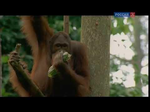 Из жизни животных BBC