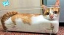 НОВЫЕ ПРИКОЛЫ КОТОВ! ПРИКОЛЫ С КОТАМИ - Смешные коты и кошки 2019