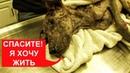 СПАСЛИ УМИРАЮЩУЮ СОБАКУ выпала шерсть, короста, клещи Ветеринарное ранчо