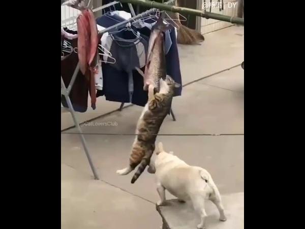 Пёс режыма мешает кiту освоить грант.