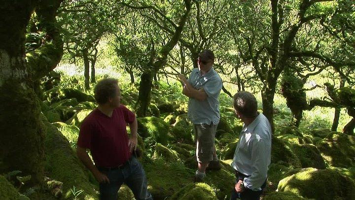 BBC Жизнь 10 серий из 10 Life 2009 Серия 09 Растения Plants