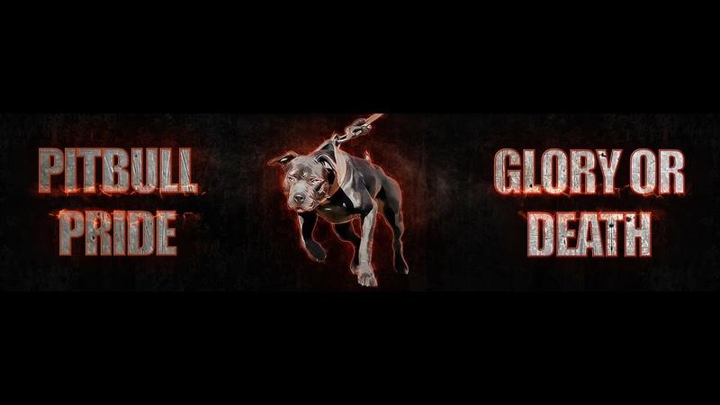 PITBULL PRIDE - GLORY OR DEATH