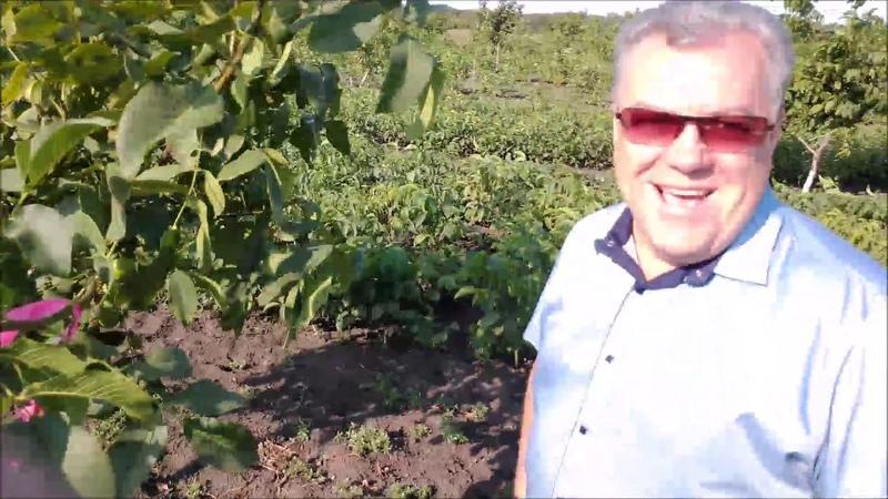 Посещение орехового сада из сеянцев Осмотр перспективных форм Мария Самарская Август 2019