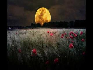 3 часа! Пение птиц Звуки природы Ночной лес Расслабление и здоровый сон Nature Sounds