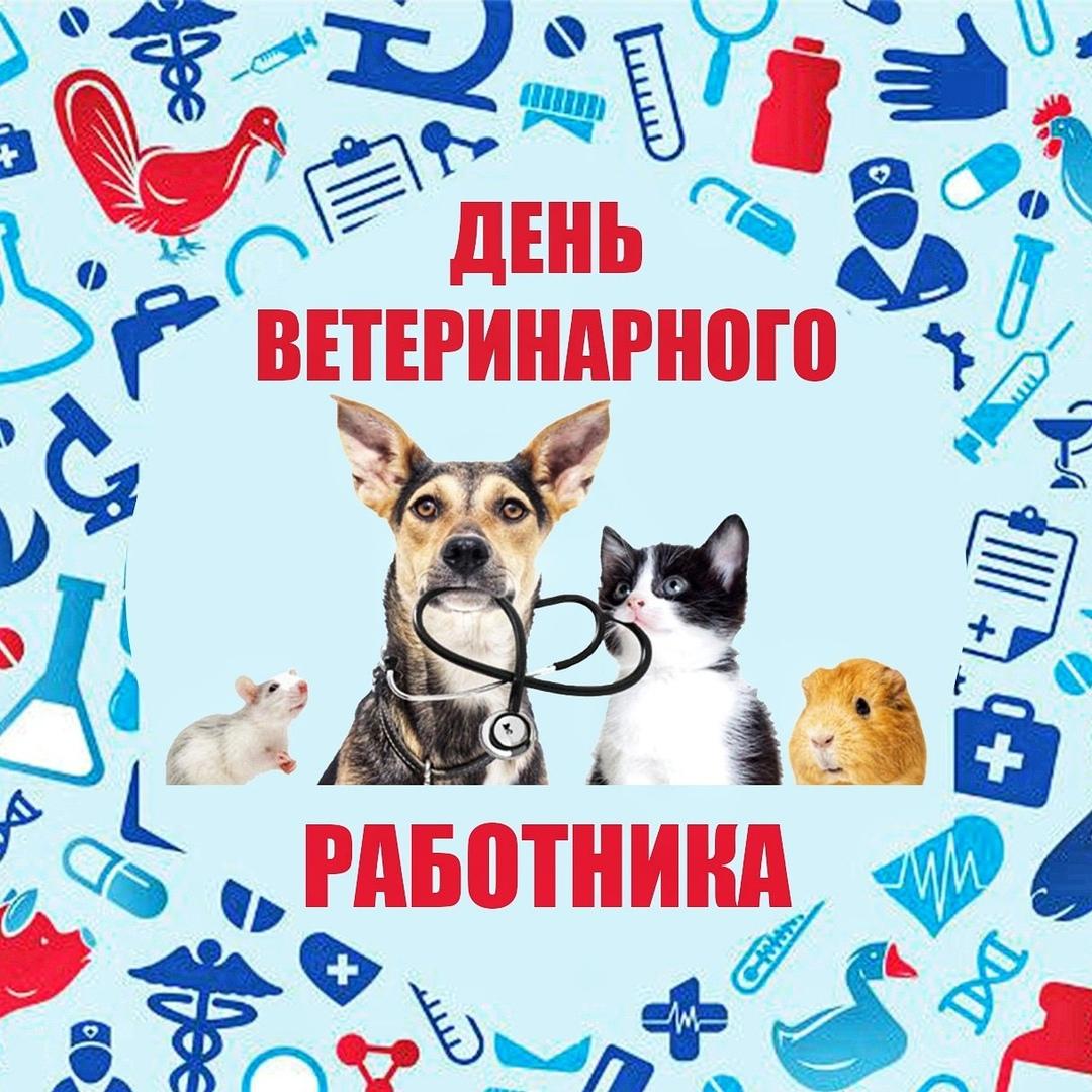 время поздравление работников ветеринарии абсолютно означает что