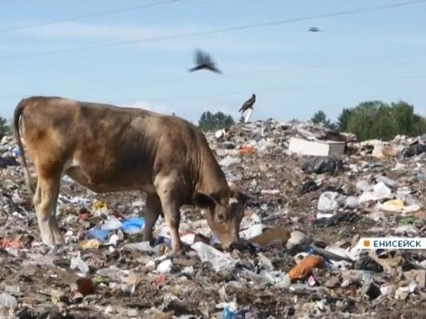 В Енисейске полигон для временного хранения мусора превратился в огромную свалку