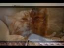 Кот обормот