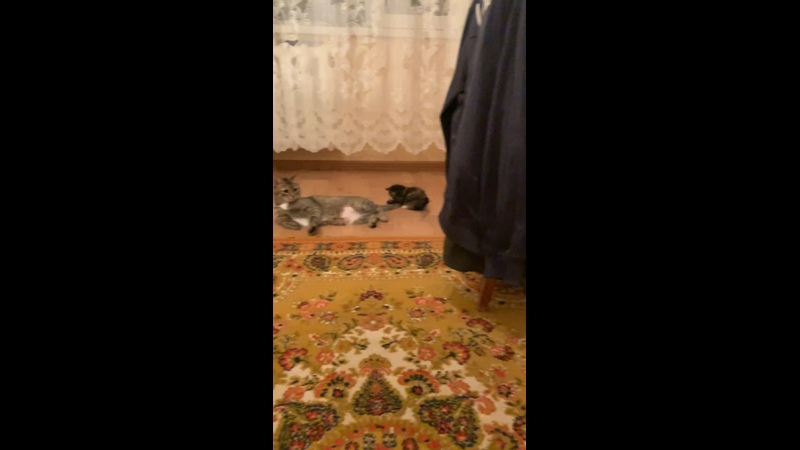 Видео от Юлии Елисеевой