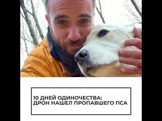 Пропавшего в лесу пса нашли с помощью дрона
