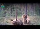 Лесной воспитатель и двойняшки-малыши в брянском лесу🐻🌿