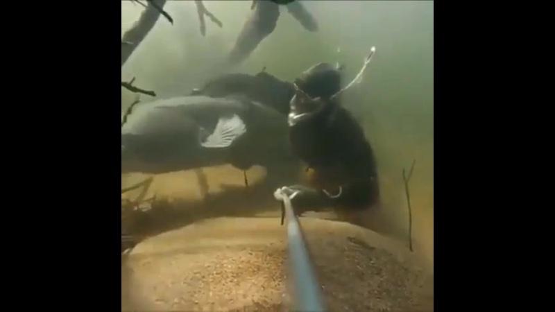Речные монстры во всей красе Подводная съемка 😃👍🏻