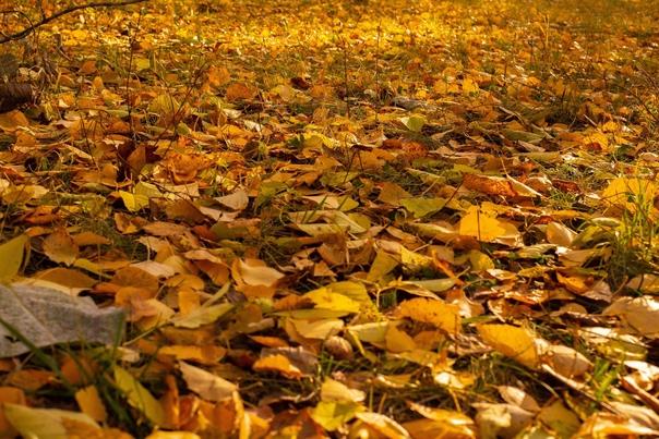 Осенние краски НовосибирскаФотограф: Максим Калашников ht...