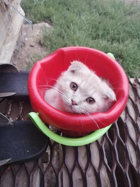 Пропал любимый котенок в районе Шанхая ул. Уральск...