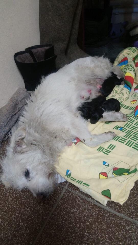 На АЗС забежала собака и начала рожать((
