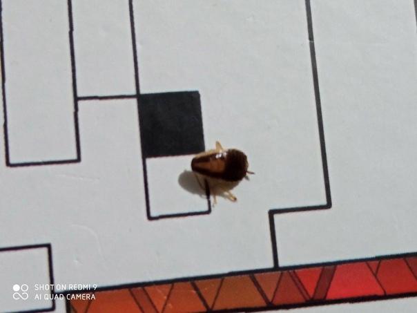 Что это за такое насекомое? По всей квартире бегаю...