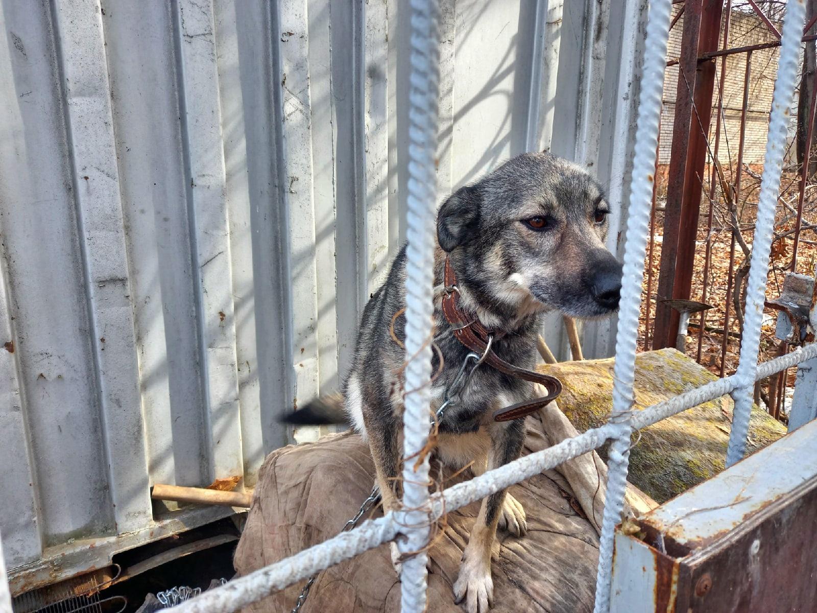 4 июня пропала собака в районе Санэпидемстанции